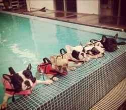 最有技术的暑期游泳培训班