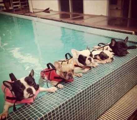 参加暑期游泳培训班的孩纸果然一个比一个苦B。。。