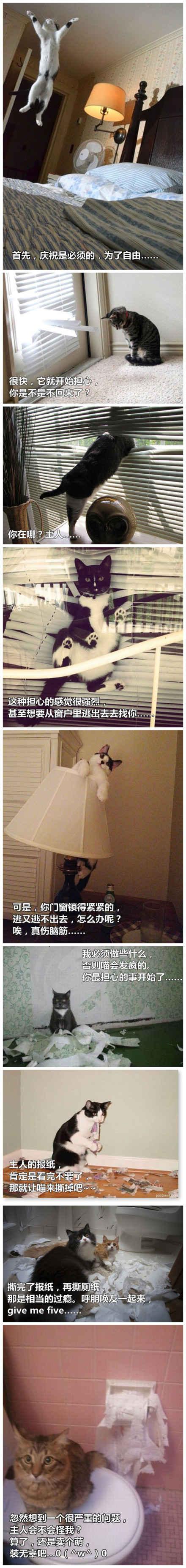 当你离家后,你家的宠物会干什么?
