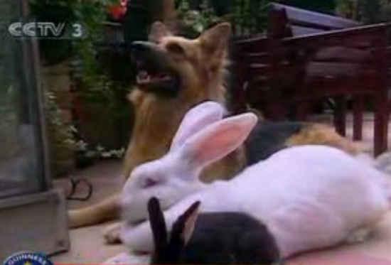 这才叫大白兔