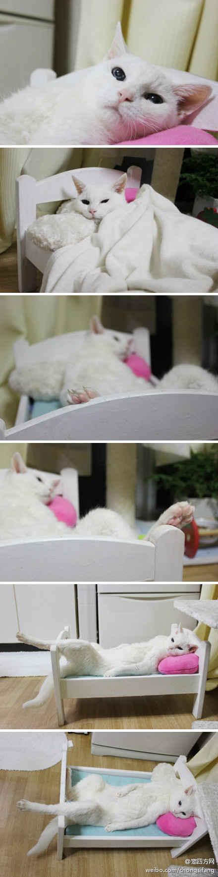 这只可爱的白猫叫做SUEKO,来自日本,她已经20岁了哟,她出生在1992年4月25日,她的主人非常爱她,定期带她检查身体,把她打扮的干干净净,她还有自己专用的小床,小枕头,小被子。她的睡姿是不是很销魂?