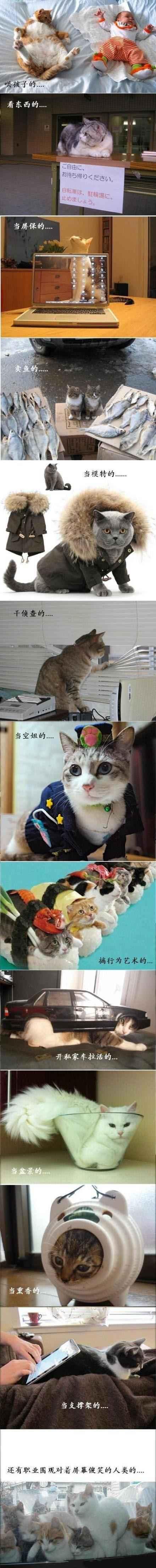 这年头,做只猫也不容易啊!第四张真是笑死我了!!!