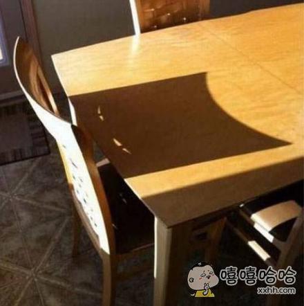 我无法相信这把椅子