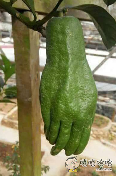 绿巨人的手