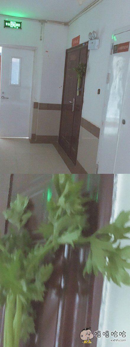 端午节不是要在门口挂艾蒿吗……我的邻居为什么要挂芹菜?????????(担心自己认错还偷拔了一片叶子…这是芹菜吧????