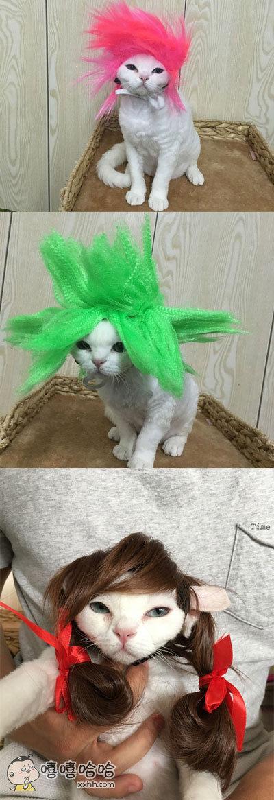 猫:组织快来救我!