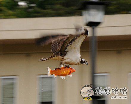 锦鲤:带我装逼,带我飞!