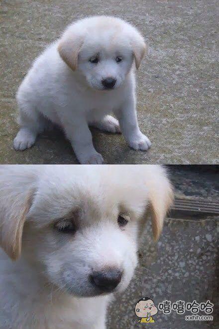 一网友在路边拍到了一个伤心到不行的狗狗,这小眼神简直要心疼哭了