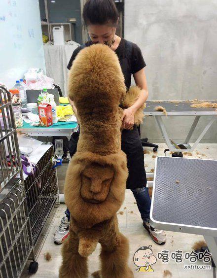 一家宠物店,提供宠物花样纹身服务