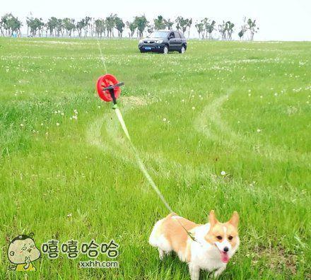 放风筝遛狗两不误~