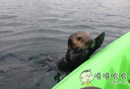 一位网友和他女友去划船,结果遇上了一只游过来打招呼的小水獭~