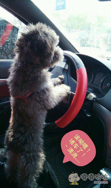 刚拿驾照,开车就是这么猛!