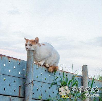肯定不是我一个人认为这只猫在吞管子?
