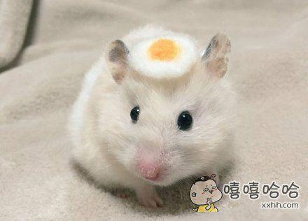 这个鸡蛋帽子太可爱了