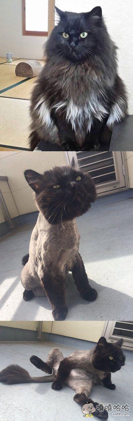 一主人带着自家猫咪去剪毛,要求整体稍稍短一点,然后圆润一点可爱一点。。。结果就这样了。。。。