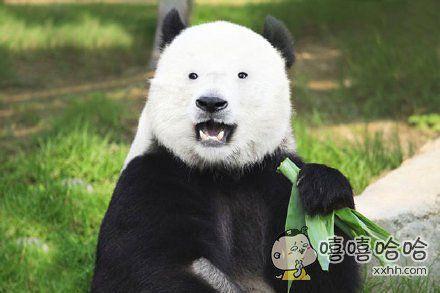 如果熊猫没了黑眼圈