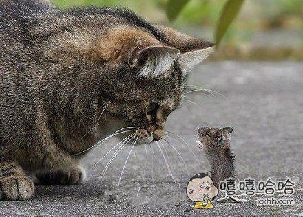 """""""鼠窝在那边!"""""""