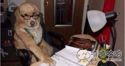 再帮小主人做三次作业的话就能得到一捆腊肠啦!