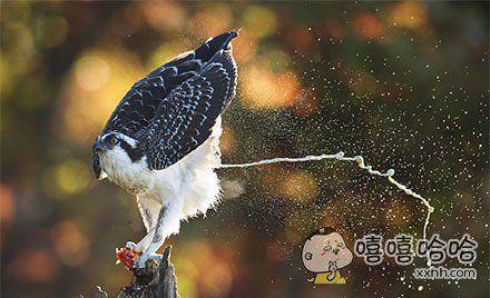 这是什么鸟?威力太猛了!