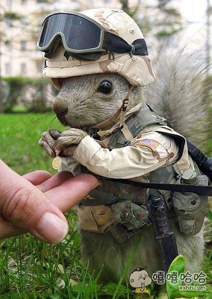 松鼠士兵:谢谢长官对我的肯定与鼓励!