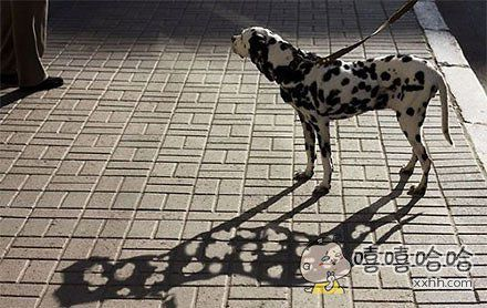 晚上带狗出去玩,走到路灯下惊呆了。。。。。。
