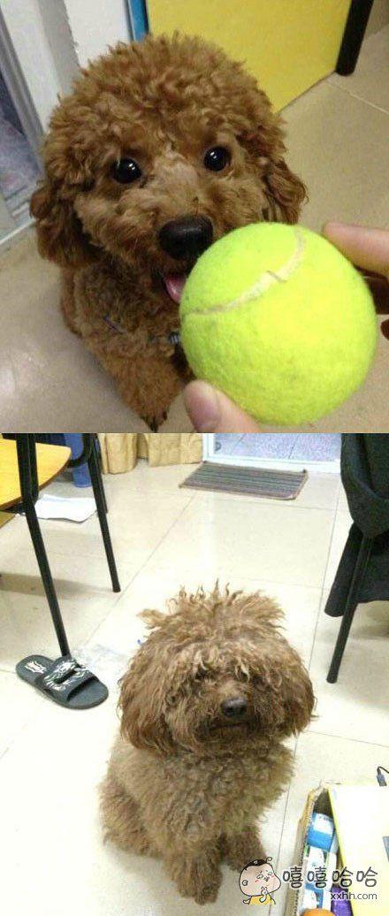 狗狗托给男票养了一学期之后。。。。