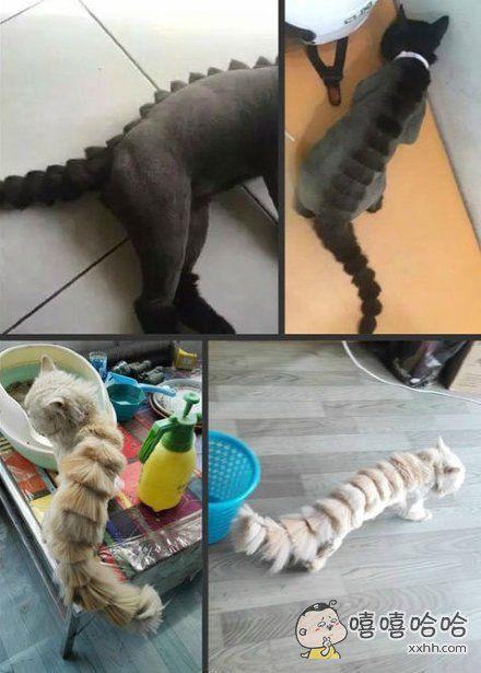 夏天到了,很多朋友会给猫剃个别致的恐龙造型,某网友依样画葫芦,结果得到了一只皮皮虾。。。。