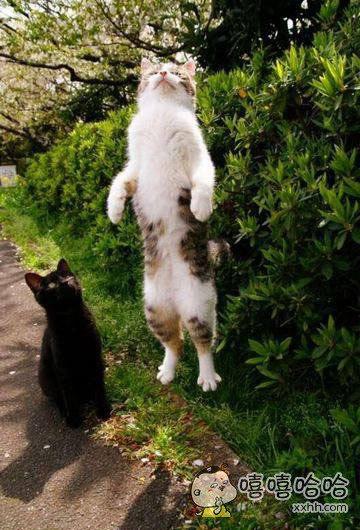 黑猫一脸懵逼:卧槽!!!这啥情况???