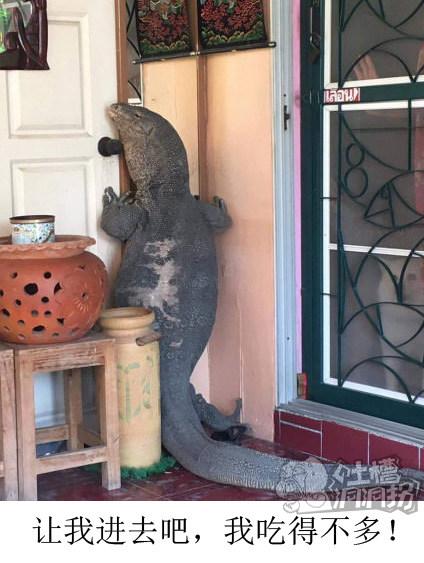 让我进去吧我吃的不多~