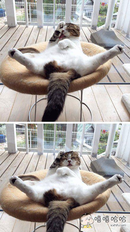 推主akihimatandon11家的猫咪,在悠闲的午后,温暖的阳光,舒服的躺椅,做着一幅君子坦蛋蛋的样子舔毛……光天化日之下你在干什么呢!