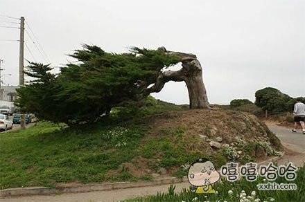 大风吹乱了我的秀发!