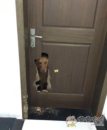 汪:是这门!不让我见你