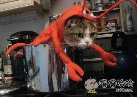 不好了,客人,您点的龙虾在恶意卖萌