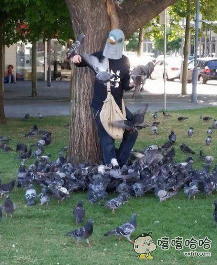 捕捉一只鸽子王
