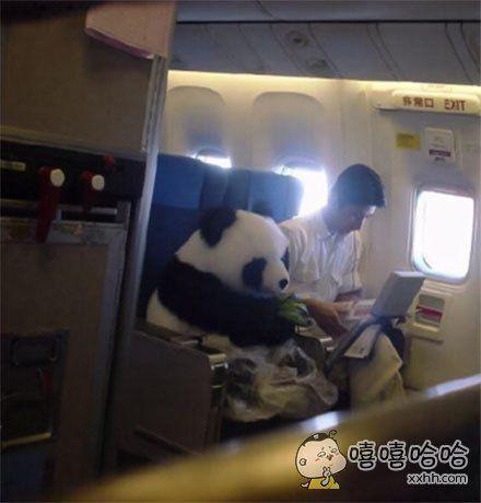 熊猫:空姐,来张报纸,牛奶一杯,竹笋一根,谢谢!
