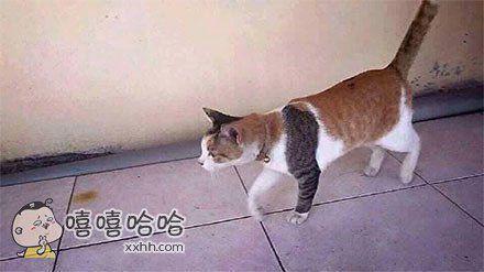 猫界扛霸子