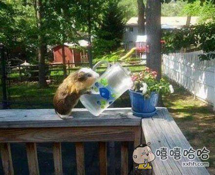 下一秒是给花浇水还是杯子打了?