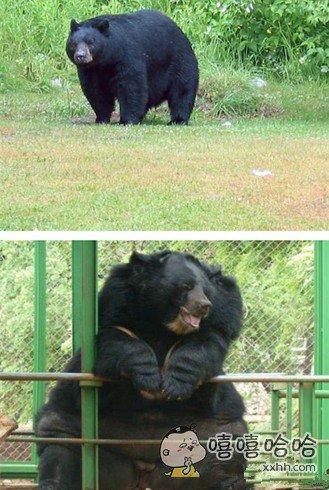 别忘了你是只熊,有点节操啦
