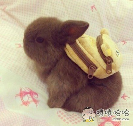 当兔子背上书包后。。。萌哭了!!