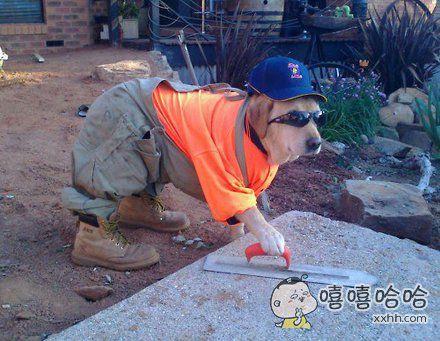 汪星人找了一份好工作。