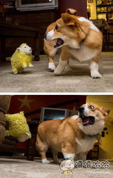 我的天啊,绵羊娃娃复活啦