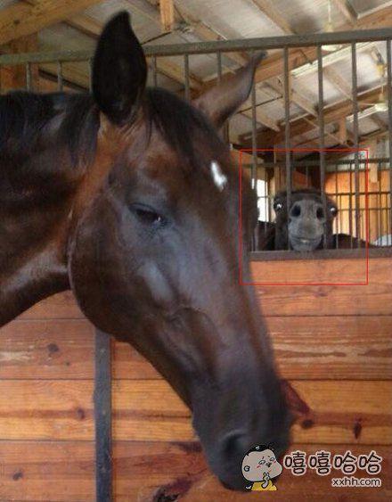 这个世界上马也分两种