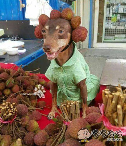 网友在菜市看到很敬业的狗狗