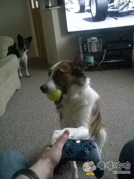 别玩游戏了,来玩我吧