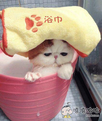 美猫出浴图,喵~~