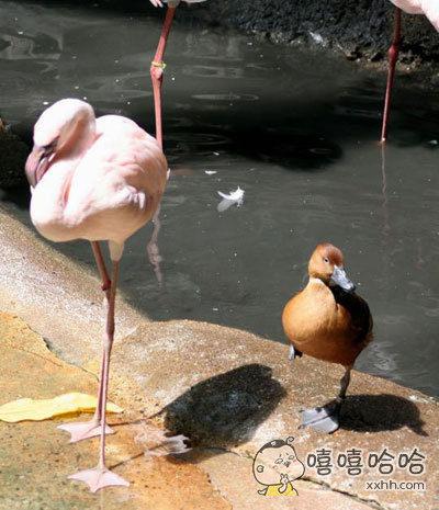没人告诉你你只是一只鸭子吗?