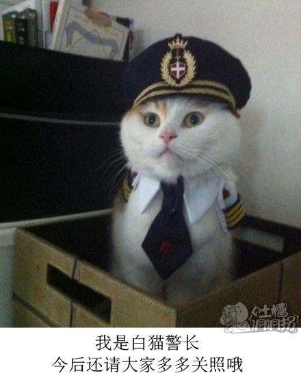 我是白猫警长,今后还请大家多多关照哦