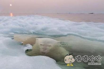 北极熊好像遇到了点麻烦