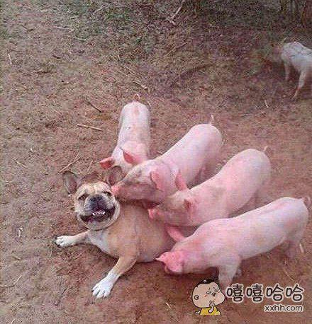 猪多力量大,欺负你个死狗