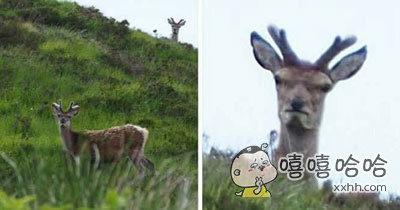 网友在苏格兰遇见了一只看起来不太高兴的鹿。。。